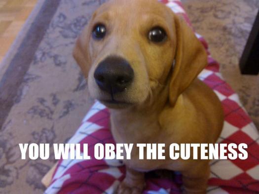 OBEY.